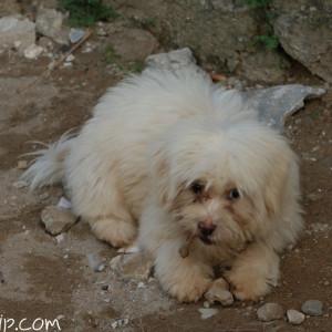 ラオスは犬が多い。可愛いけど、みんな小汚い。洗ってあげたい。