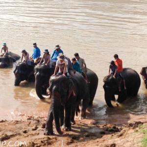 象に乗ったままメコン川へ突入。ずぶ濡れに。