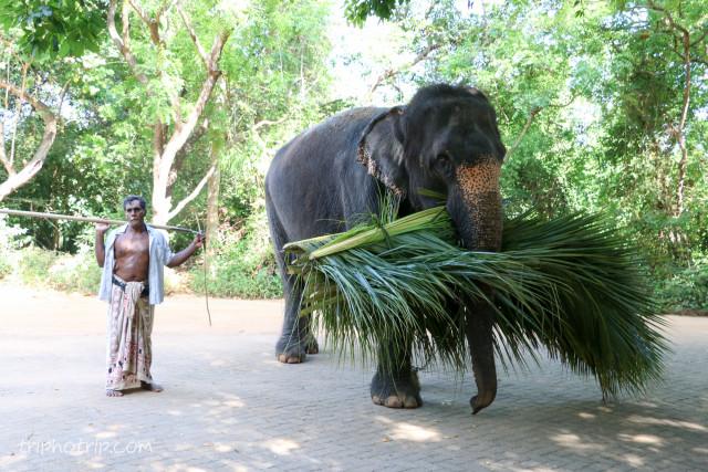 srilanka-3981