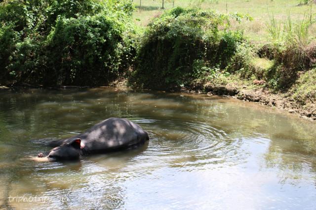 srilanka-4114