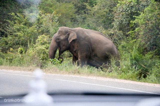 srilanka-4350
