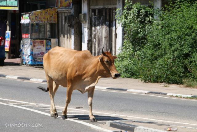 srilanka-4491