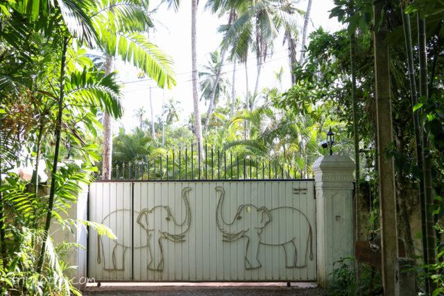 srilanka-4962