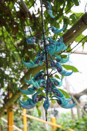 謎の青い花。とても不思議な色の花でした。どなたか名前をご存知でしたら教えてください。